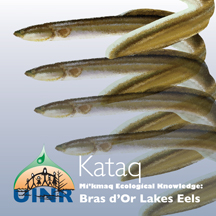 Kataq–Mi'kmaq Knowledge on Bras d'Or Lakes Eels