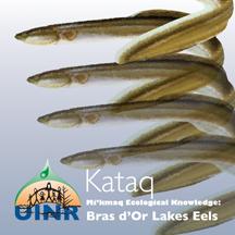 Kataq–Mi'kmaq Knowledge on Bras d'Or Lakes Eels