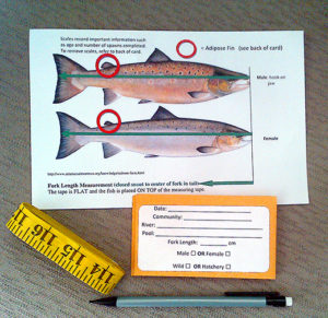 salmon kit photo