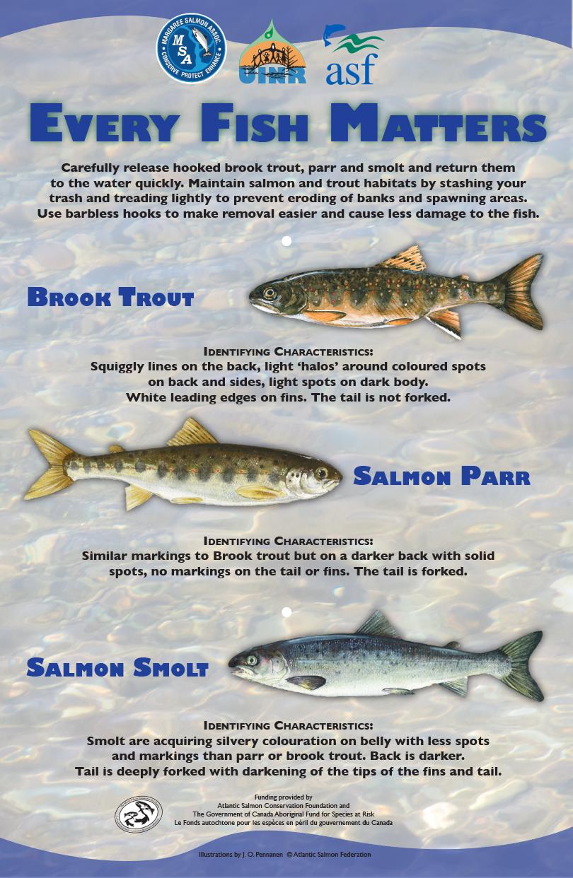 Every Fish Matters!